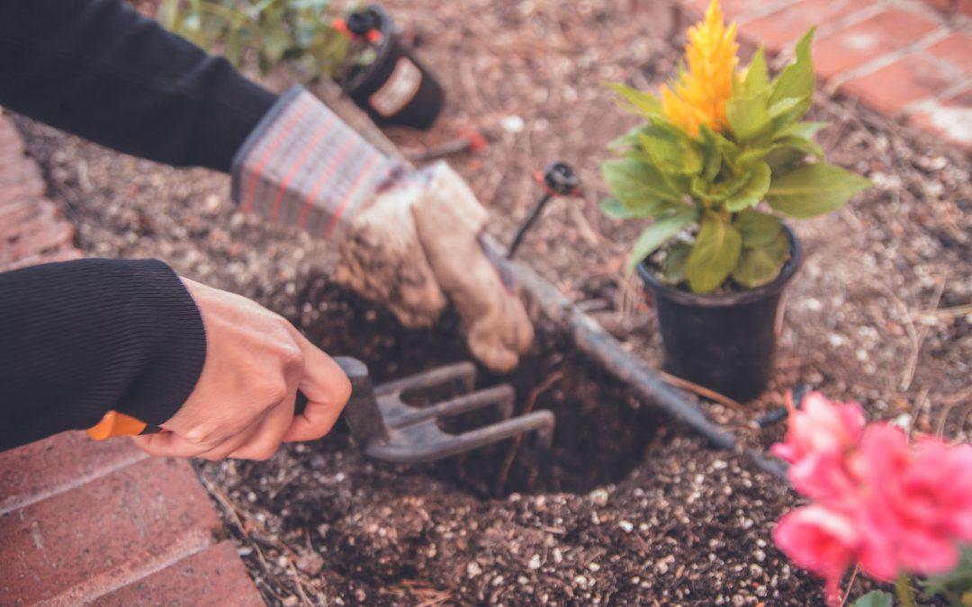 Buena Vista Gardening Group
